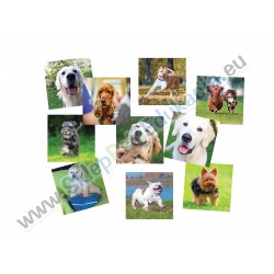 Psi album - zdjęcia